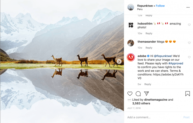 """Instagram post of 3 llamas by """"flopunktwe"""" with comment by Adobe asking permission to repost"""