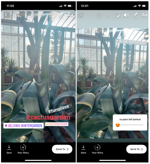 Instagram Story of a cactus garden with 3 hashtags hidden behind a poll sticker