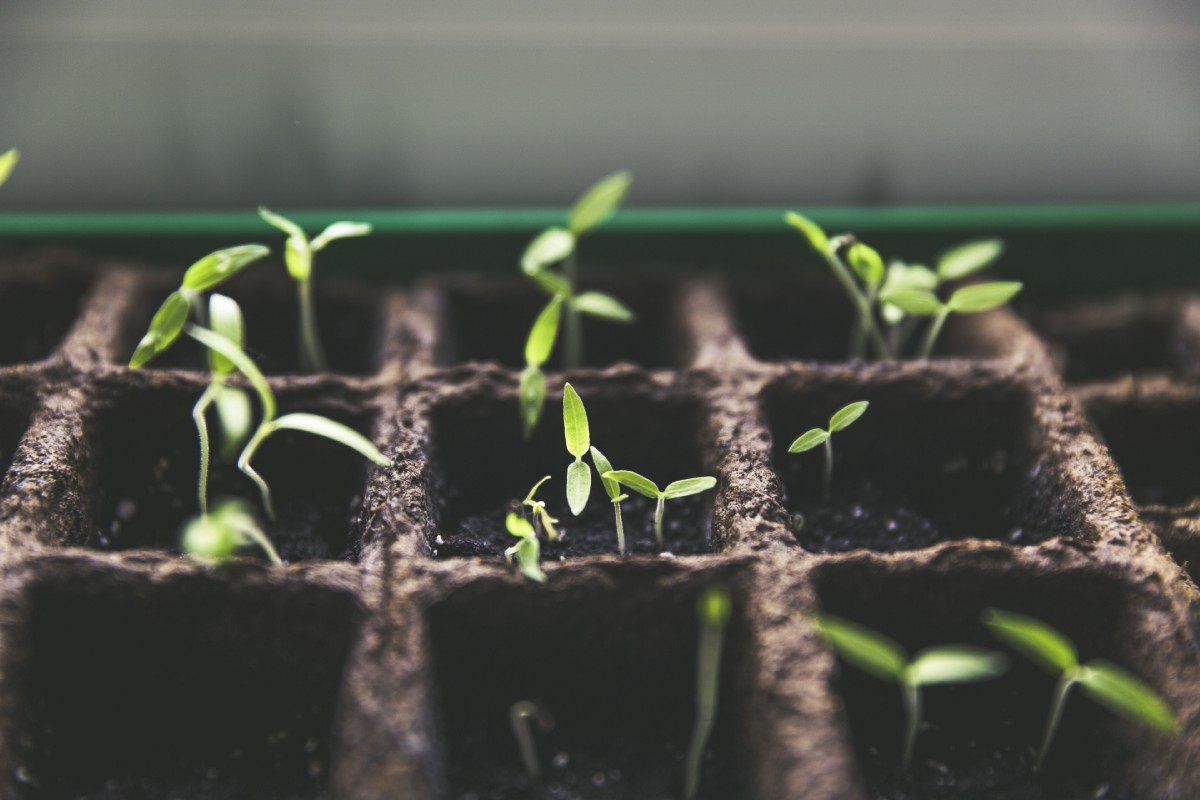 Why do lots of start ups redefine the role of research as they grow? | by Felix Rossmann | Jan, 2021